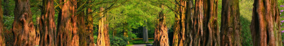 Photo of tree lined path for category Outdoors