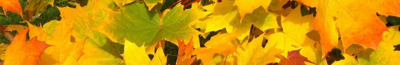 Photo of autumn leaves for category Seasonal