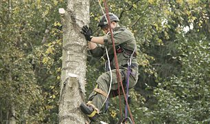 ace tree surgeon