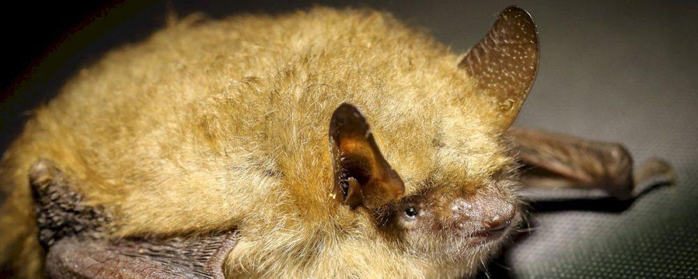 Go Bats! (Linlithgow Palace)