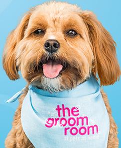 The Groom Room Dog