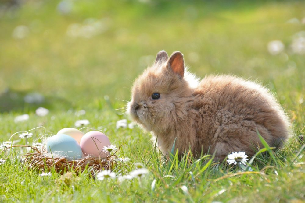 Photo of Easter Bunny