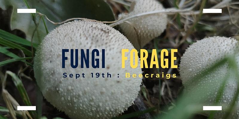 Fungi in the Morning